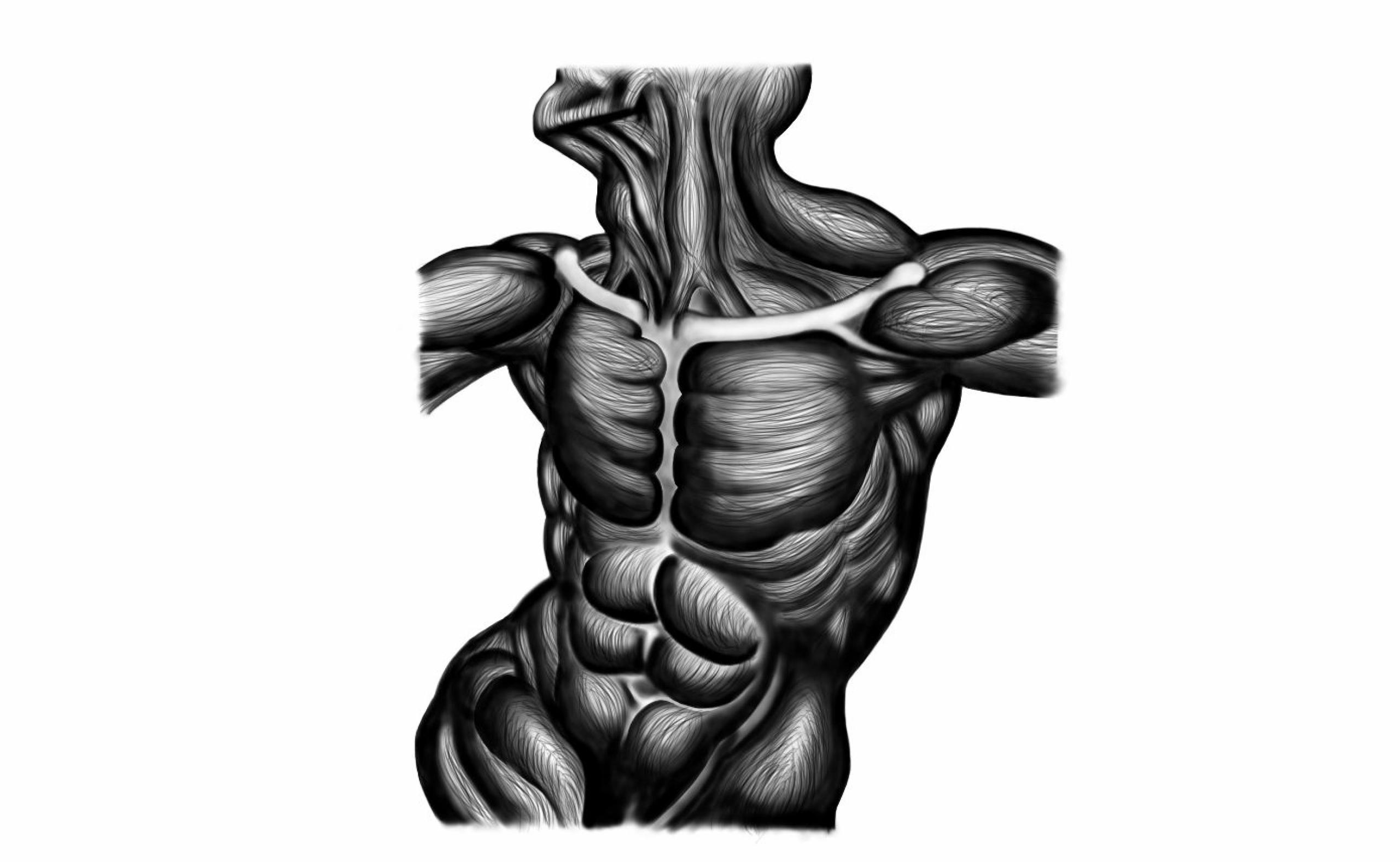 Estudio de músculos del cuerpo humano\' por Rodrigo Ortega | Worktrait